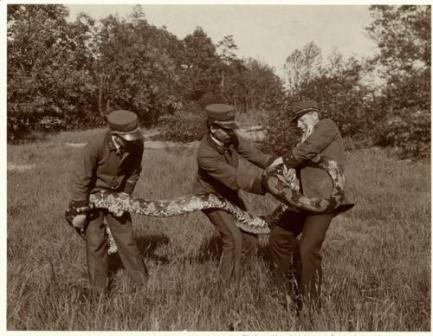 snake, 1906, park employees