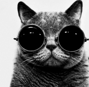 The Eye of Faith Cat with glasses