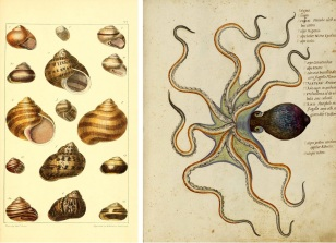 Natural History Lesson - Octopus Shells