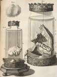 Ruysch (Oppulent Science)