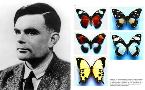 Turing and Morphogenesis