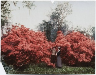 The glory of azaleas - magnolia on the ashley - s.c. 1901