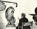 Ham it Up Hitchcock- Directing a Lion