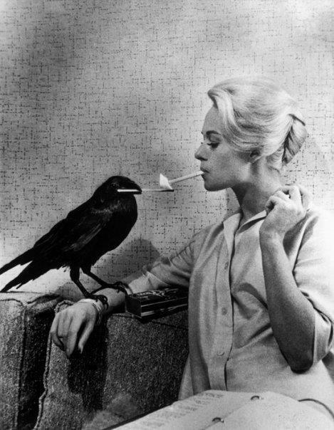 cigarettes tippie henderson and bird