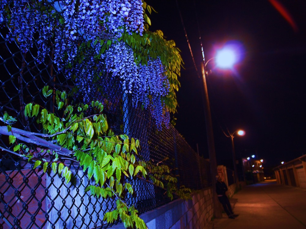 lucifer-rising-photograph-by-aaron-duarte-copyright-the-eye-of-faith-2013-1